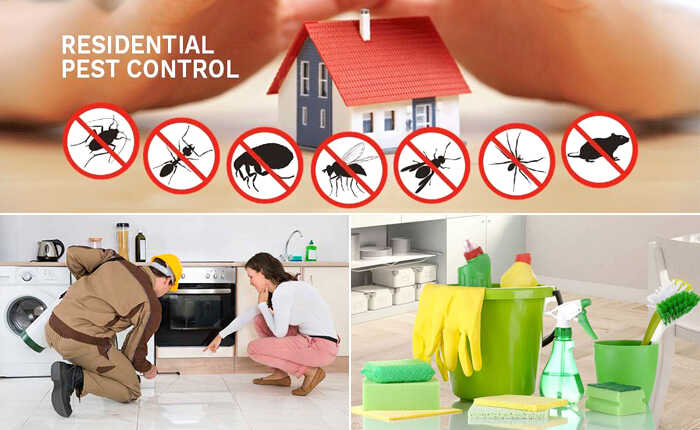 5 Reasons Why You Need Pest Control Service
